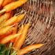 Fresh carrots - PhotoDune Item for Sale