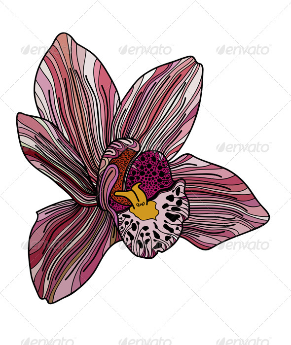 GraphicRiver Exotic Orchid Painted in Pink Colors 8679117