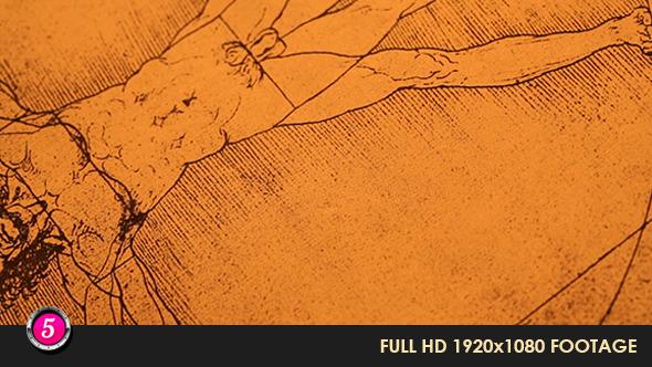 Anatomy Drawings 22