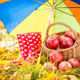 Autumn fruits - PhotoDune Item for Sale