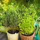 Herb garden - PhotoDune Item for Sale