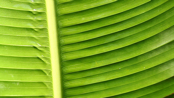 Green Leaf In Nature 8