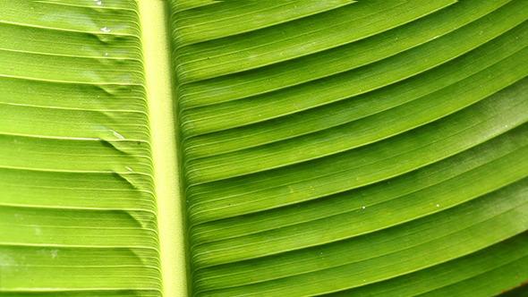Green Leaf In Nature 8