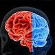 Brain 2 - VideoHive Item for Sale