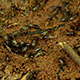 Wild Termites At Forest Floor - VideoHive Item for Sale