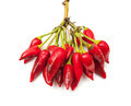 Bunch of fresh small red pepper - PhotoDune Item for Sale