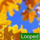 Leaf Background - VideoHive Item for Sale