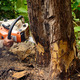 Man with chainsaw cutting the tree - PhotoDune Item for Sale