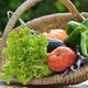 garden vegetables basket - PhotoDune Item for Sale