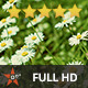 Summer Meadow (3-Pack) - VideoHive Item for Sale