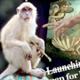 monkeybrush