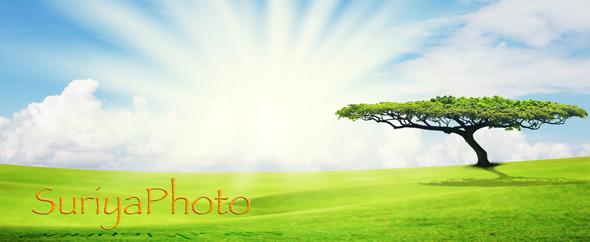 Suriyaphoto-profile590x242-100k