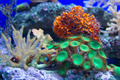 Coral Reef - PhotoDune Item for Sale