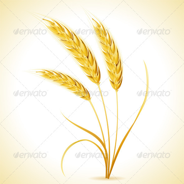 GraphicRiver Ears of Barley 8713409