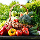 Wicker basket with assorted raw organic vegetables in the garden - PhotoDune Item for Sale