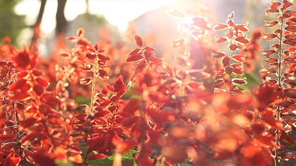 Sunny Red Flowers