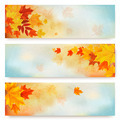 Three abstract autumn banners with color leaves.  - PhotoDune Item for Sale