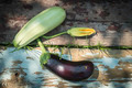Zucchini and eggplant with blossom - PhotoDune Item for Sale