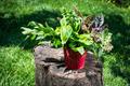 Fresh herbs - PhotoDune Item for Sale