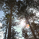 Forest Treetops - VideoHive Item for Sale