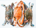 Crab on white background - PhotoDune Item for Sale