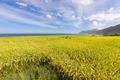 Paddy terrace farm near the sea - PhotoDune Item for Sale