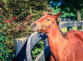 Foal by the fence - PhotoDune Item for Sale