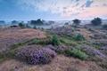 misty morning on heatherland - PhotoDune Item for Sale