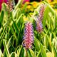 Flower in Garden - PhotoDune Item for Sale