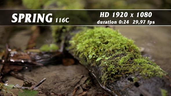 Spring 116C
