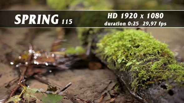 Spring 115