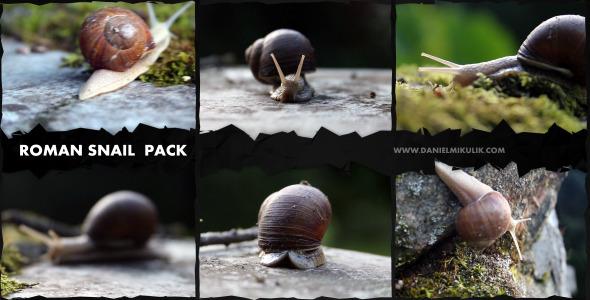 Roman Snail Footage Pack