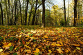 Bright colorful leaves in autumn forest. - PhotoDune Item for Sale