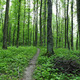 Path in spring green forest. - PhotoDune Item for Sale