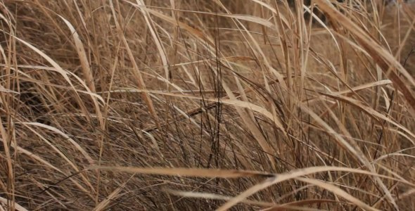 Wild Field in November 02