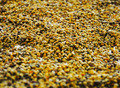 Bee pollen. For your commercial and editorial use. - PhotoDune Item for Sale