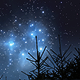 Night in the Forest (2-pack) - VideoHive Item for Sale