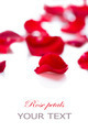 Rose petals isolated on white background - PhotoDune Item for Sale