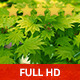 Dancing leaves - VideoHive Item for Sale