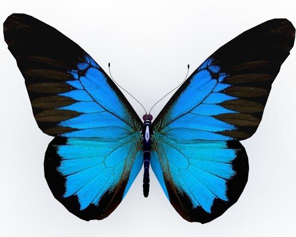 3DOcean Butterfly 8740958