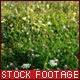 Flower Meadow - VideoHive Item for Sale