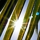Morning Sun through Palm Leaves - VideoHive Item for Sale