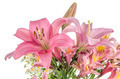 Pink lilies - PhotoDune Item for Sale