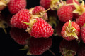 Fresh raspberries - PhotoDune Item for Sale