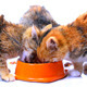 Kittens Eating - VideoHive Item for Sale
