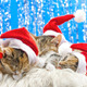 Christmas Santa Cats 1 - VideoHive Item for Sale