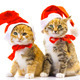 Christmas Santa Cats 3 - VideoHive Item for Sale