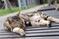 Cat sleep on a chair. - PhotoDune Item for Sale