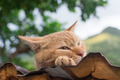 Cat resting on the roof. - PhotoDune Item for Sale