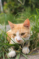 Cat lying on the grass. - PhotoDune Item for Sale